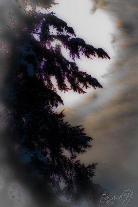 sunandtree-6108